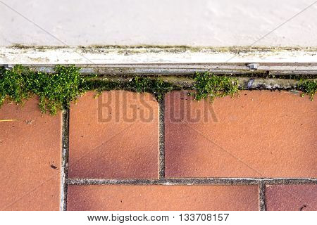 brown tiles with dirty joints and moss