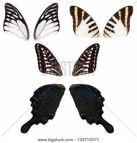 Set of different butterflies wings isolated on white