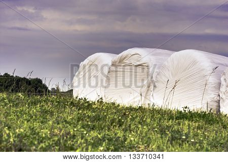 Plastic wrapped hay bale silage in a field. A preservation method for high moisture forages.