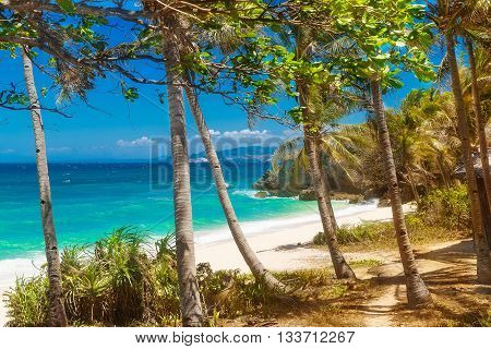 tropical sand beach with palm trees summer vacation