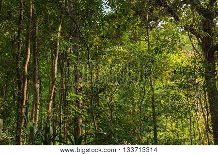 Landscape of tropical forest in the evening Thailand.