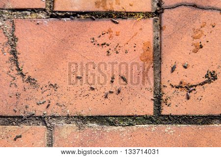 isopods on brown bricks and lot of dust