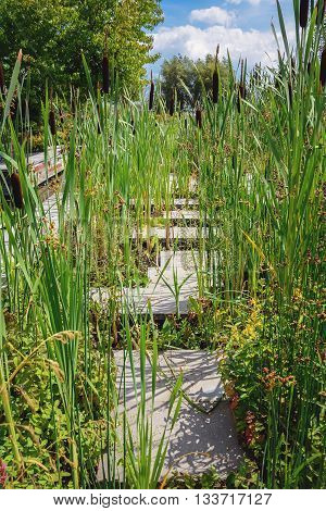 Garden path overgrown with reeds on the surface of a decorative pond