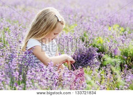 cute little girl is going to a lavender field