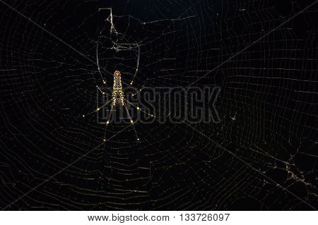 Spider On Web Close Up At Night