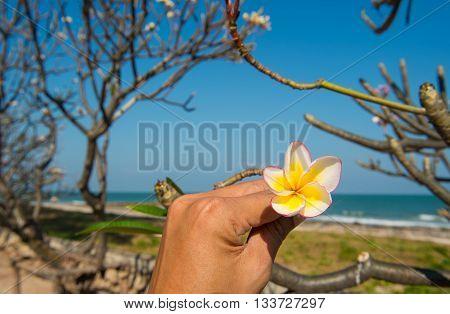 Frangipani flower side the sea with blue sky background