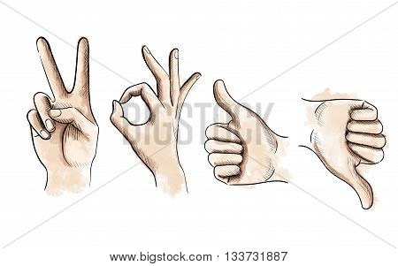 Vector Illustration of Thumbs up and down Set of vector gestures by hands.