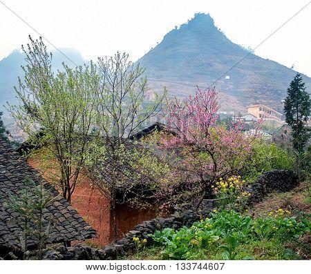 Spring flower garden, rock plateau Ha Giang, Vietnam