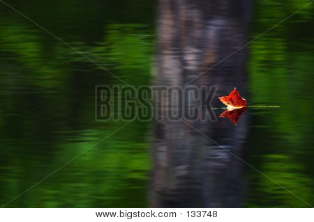 Red Leaf On The Water