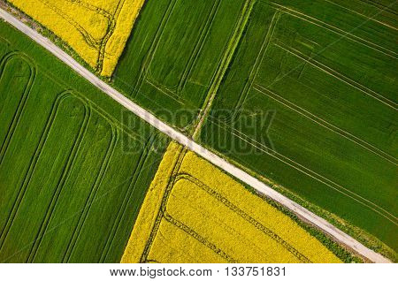 Colza Field Aerial View