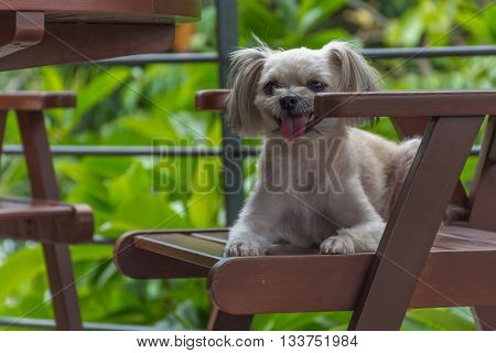 Dog So Cute On Chair