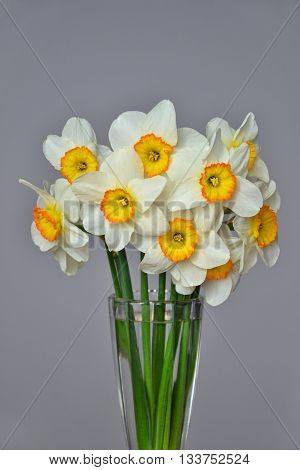 Narcissus Spring Flowers Bouquet Yellow White 3