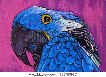 Beautiful blue parrot on purple background .
