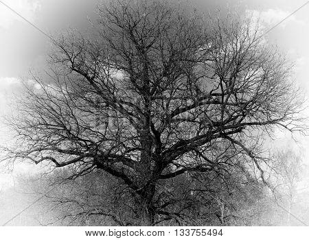 Horizontal dramatic tree crown bokeh vignette background backdrop