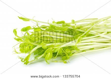 Sweet Pea Sprouts Isolated