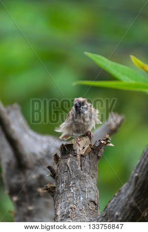 Bird Eurasian Tree Sparrow On A Tree