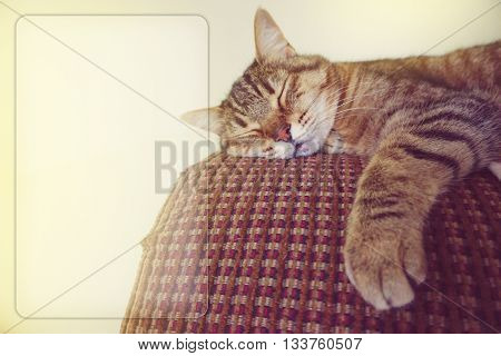 Lazy cat on the couch with copy space
