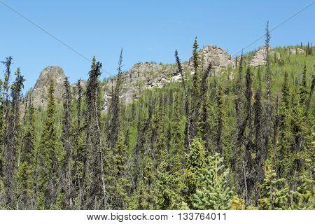 Trees flank Angel Rocks in Alaska's vast interior