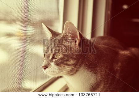 cat looking through the window - vintage style cat watching birds cat portrait with copy space