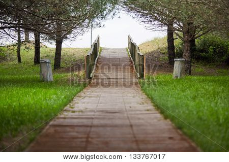 Wooden Way To The Beach Under Pines