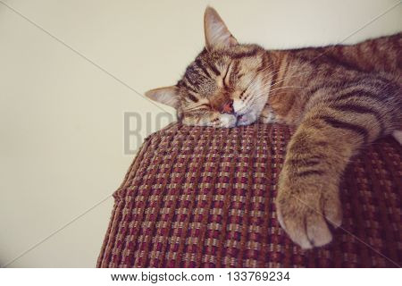 Lazy cat on the couch - take a rest
