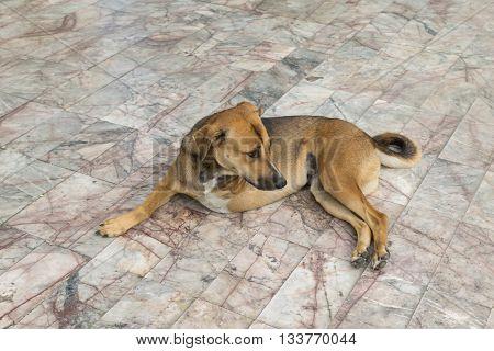 Defect Dog With Three Legs