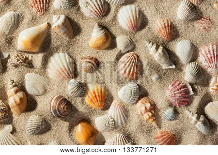 Beautiful background of sea shells on sand view from above