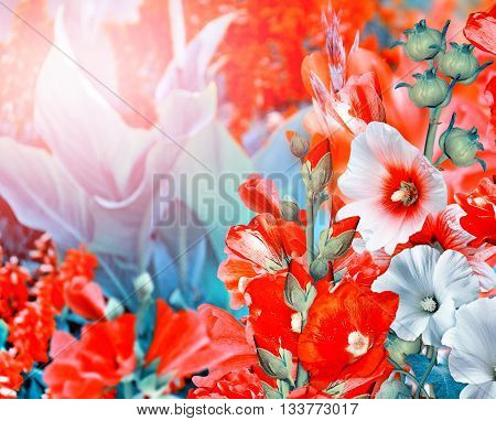 Summer landscape. Flowering branches mallow. beautiful flowers