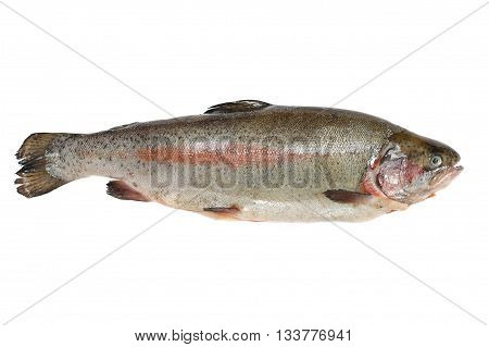 Trout fish containing omega-3 isolated on white