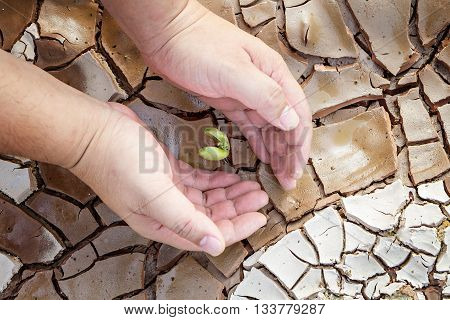 Hands Defending Green Tree Sprout On Cracked Ground, Conservation Concept