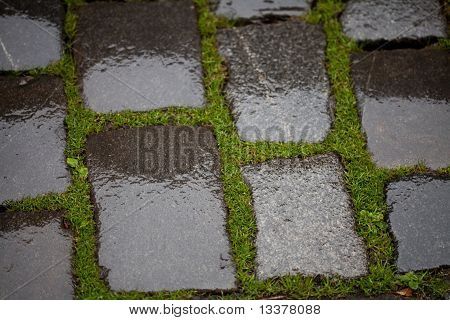 Background From The Wet Pavement With Grass