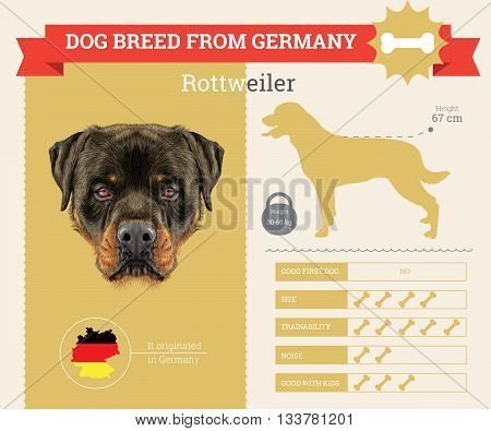 Rottweiler Dog breed vector infographics. This dog breed from Germany