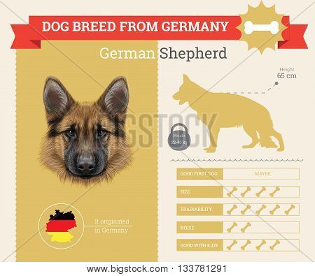 German Shepherd Dog breed vector infographics. This dog breed from Germany
