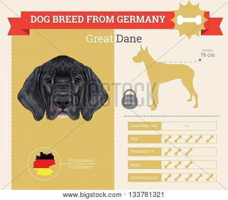 Great Dane Dog breed vector infographics. This dog breed from Germany