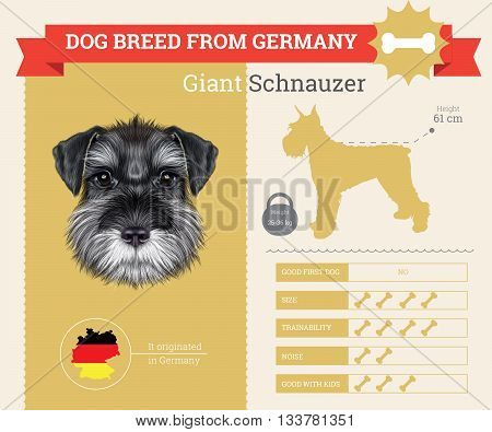 Schnauzer Dog breed vector infographics. This dog breed from Germany