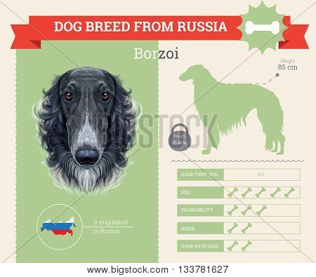 Borzoi Dog breed vector infographics. This dog breed from Russia