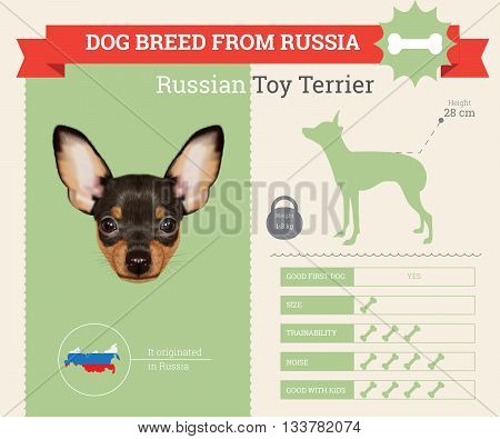 Russian Toy Terrier Dog breed vector infographics. This dog breed from Russia
