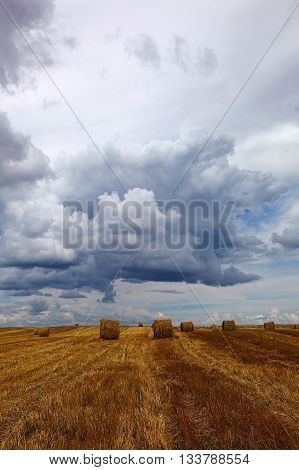Harvested wheat field with hay rolls on the background of a stormy sky.