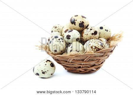 Quail eggs in a basket isolated on white background.