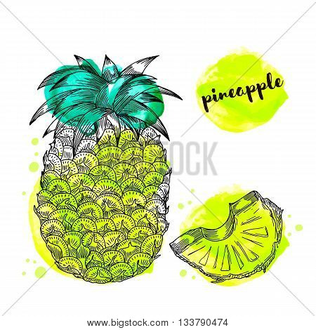 Pineapple fruit with watercolor splashes. Vector illustration.