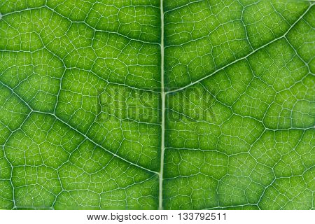 Abstract leaf texture for background.Green Abstract leaf texture