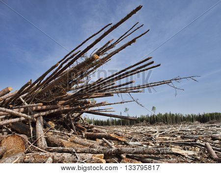 Piles of trees that have been cut in a remote region of Saskatchewan Canada