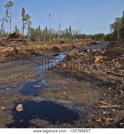 Muddy road with water through a clear cut in Saskatchewan Canada