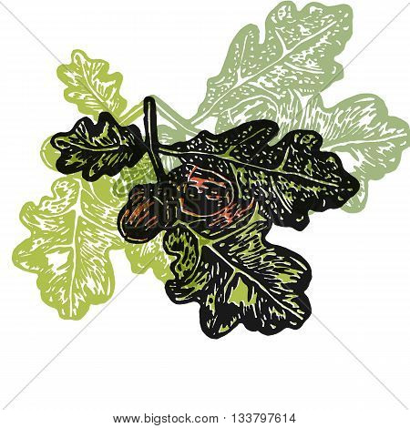 Vector acorns and oak branch in abstract composition. Linocut acorns and oak branch in different colors on white background