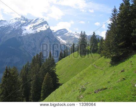 Green Swiss Hills Between High Mountains  Switzerland