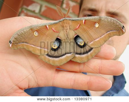 Moth on your hand as facial cover