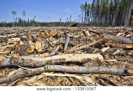 Huge section of forest that has been cut in Saskatchewan Canada