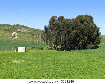 Darling Area, Wind Mill And Trees, Cape Town, South Africa 01