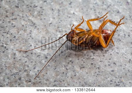 Dead cockroaches on the dirty floor tiles.