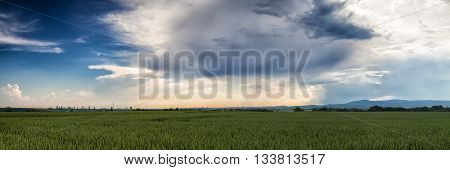Panorama over a wheat field with a beautiful cloudscape near Frankfurt Hessen Germany